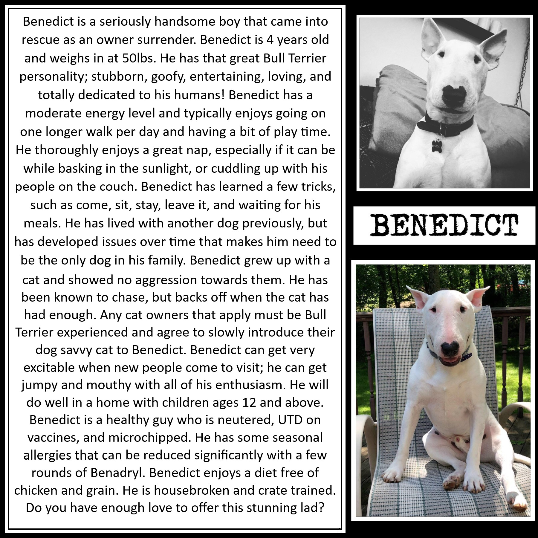 Adopt-A-Bulls – Blue Ridge Bull Terrier Rescue